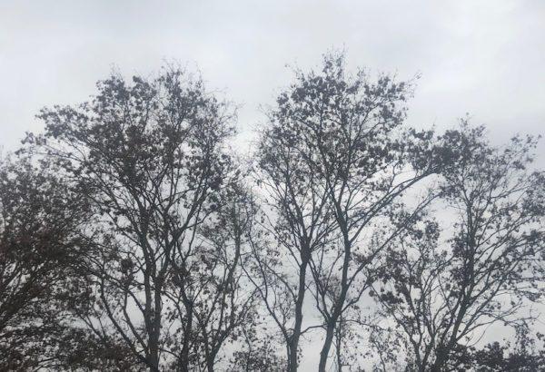 Winterblues – Och Nö!